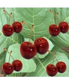 Cherry Tobacco