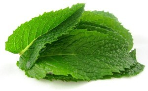 Spearmint - Kosher For Passover